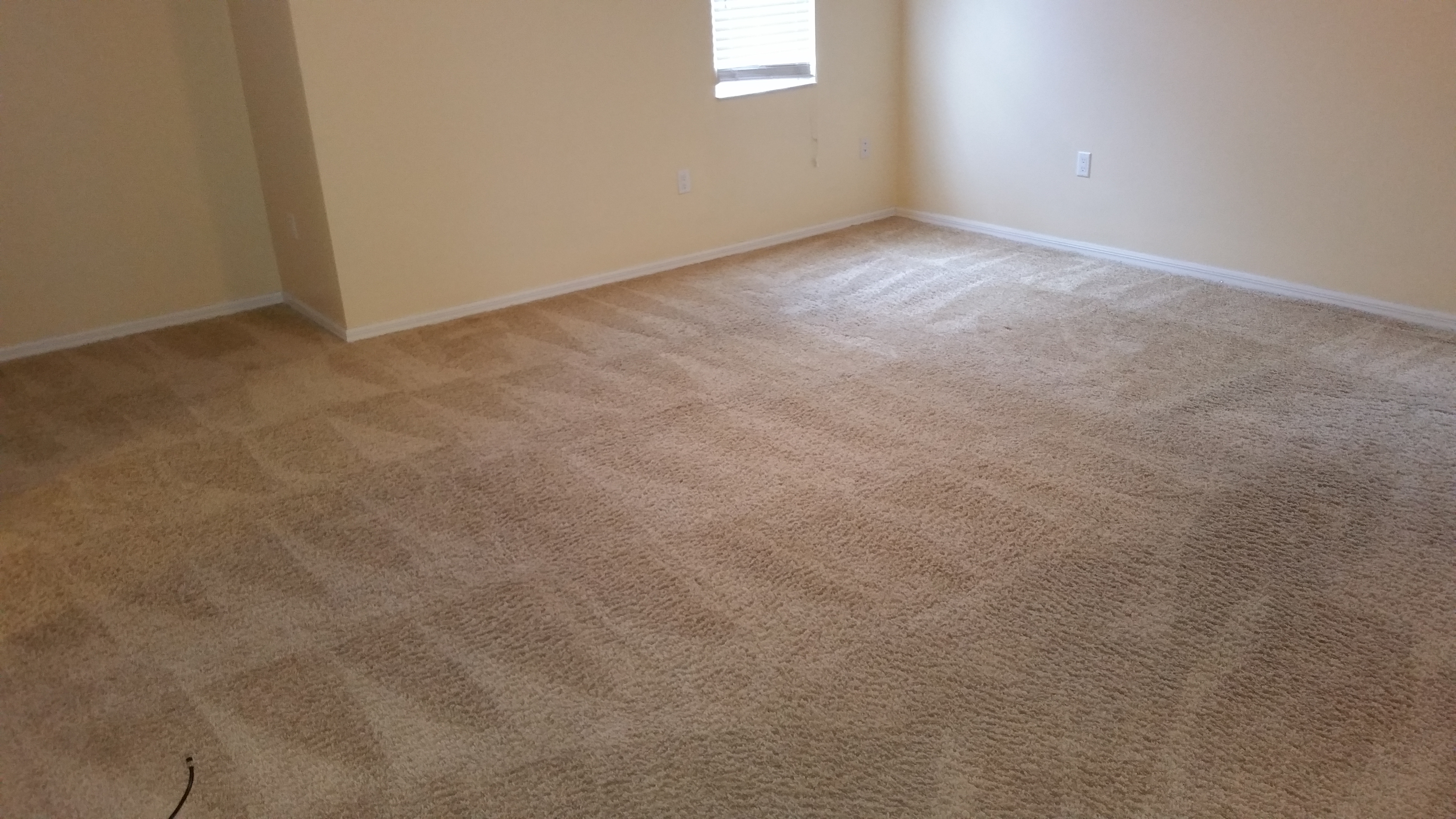 Gallery Tampa Bays Best Carpet Tile And Upholstery
